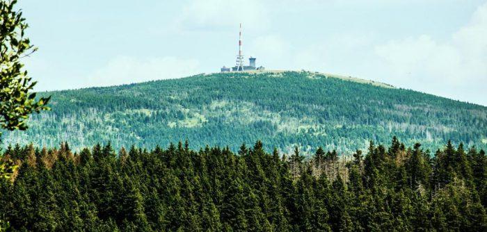 Faltblatt erklärt Waldwandel und die Waldbilder dieser Phase im Nationalpark Harz.