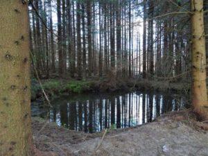 Zwei Löschwasserteiche im Nationalpark Harz ertüchtigt