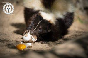 Das Frühstück im Tiergarten ist nur eines der zusätzlichen Angebote der Tourist Information Halberstadt