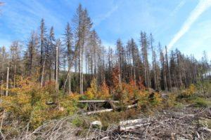 Maßnahmen zur Verkehrssicherung im Nationalpark Harz