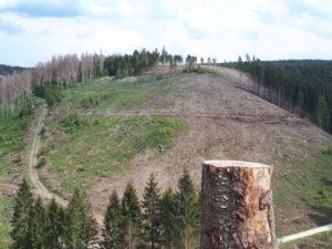 Pflanzaktionen: Der Harzer Wald geht nicht ohne uns