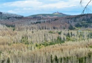 Wald im Ausnahmezustand: Harzklub e.V. sucht Allianzen