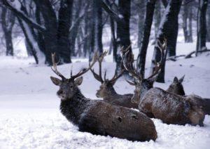 Naturerlebnis und Naturschutz bei Schnee und Eis