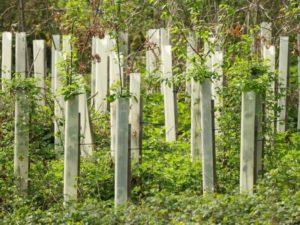 Der Harzer Wald braucht Hilfe: Pflanzaktionen geplant