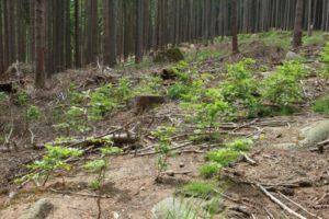 Es grünt so grün oder: Der Mai macht den Waldwandel sichtbar