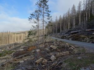 Nationalpark Harz gibt Bahnparallelwegs bei Schierke frei