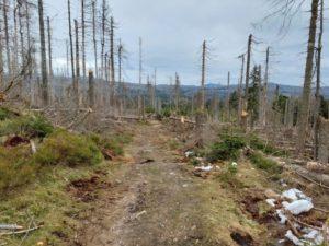 Nationalpark Harz öffnet gesperrte Wanderwege bei Torfhaus
