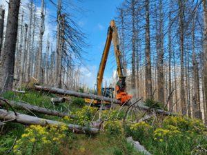 Forstmeister-Sietz-Weg im Nationalpark Harz wieder freigegeben
